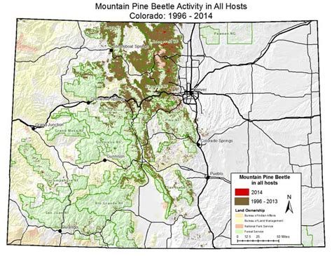 Forest Health: Mountain Pine Beetle - Rocky Mountain