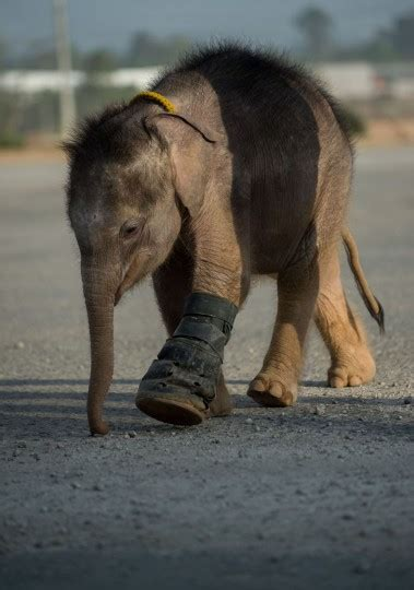 Baby elephant 'Clear Sky' learns to walk again — in water