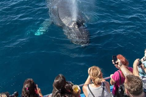 Whale-Watching Cruise from Newport Beach 2020