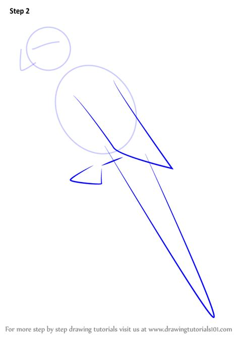 Learn How to Draw a Green-cheeked parakeet (Parrots) Step